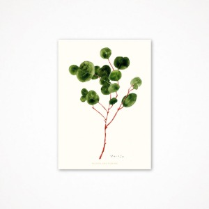 후긴앤무닌 eucalyptus - drawing card